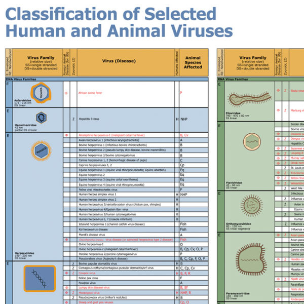 Classification Selected Human Animal Viruses Wallchart