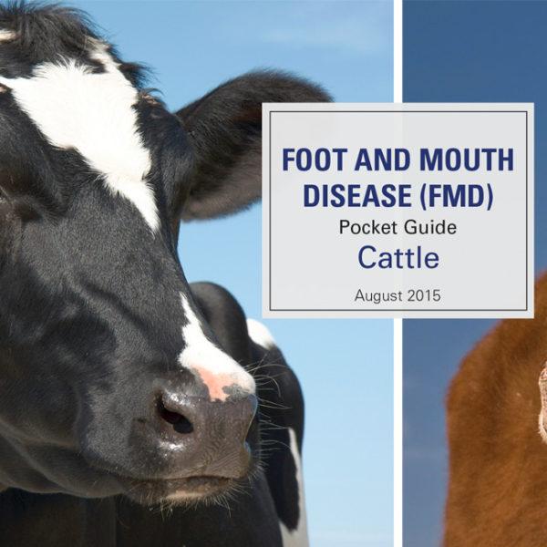 FMD Pocket Guide - Cattle