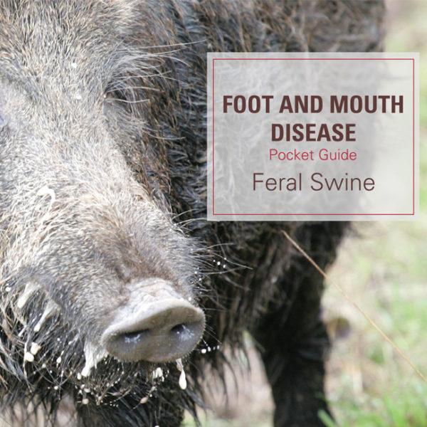 FMD Pocket Guide Feral Swine