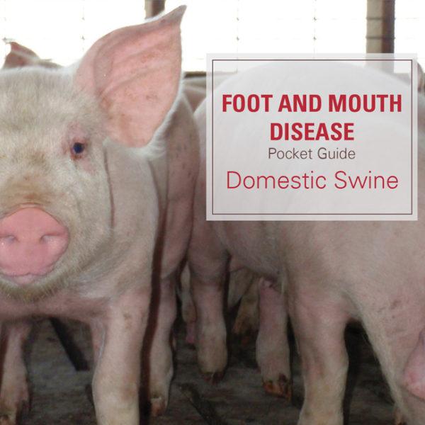 FMD Pocket Guide for Swine