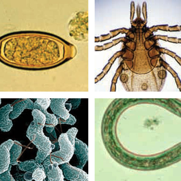 Zoonoses Course